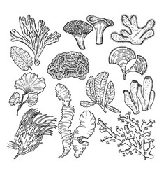 corals and underwater plants in ocean or aquarium vector image