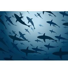 Shark school vector