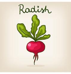 hand drawn shiny radish vector image vector image