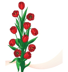 Red tulip bunch vector