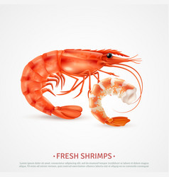 Seafood shrimps realistic advertising vector