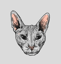 sketch portrait of bald cat vector image