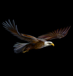 Soaring bald eagle vector