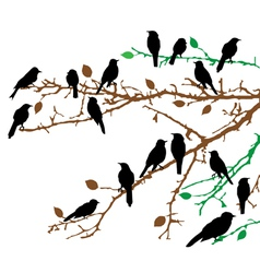branches birds vector image vector image