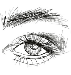 beautiful eye with long eyelashes vector image