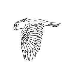black hand drawn cockatoo parrot flying vector image