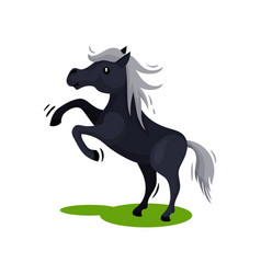 Black horse standing on its hind legs on green vector