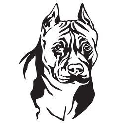 decorative portrait of dog american staffordshire vector image