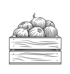 Onion bulbs in wooden crate vector