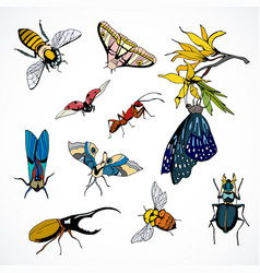 set insects colored hand drawn image vector image