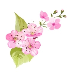 Sakura flowers Spring background vector image vector image