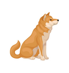 Flat icon of sitting shiba inu side view vector