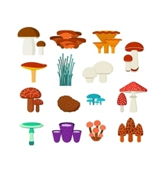 Mushrooms set different types vector