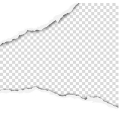 ragged wide strip in sheet of white paper vector image