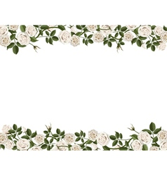 Border of white roses vector