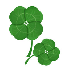 Clover green leaves isolated on white background vector