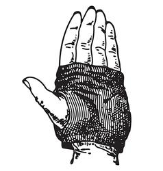 Glove vector image