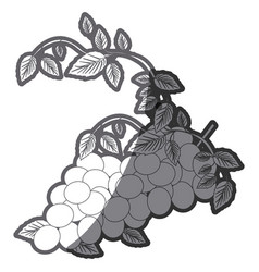 Grayscale silhouette with bunch of grapes vector