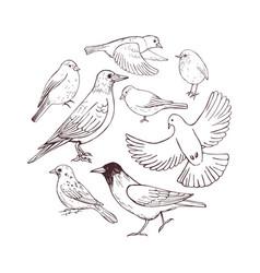 Hand drawn birds sketch vector