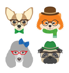 Set of dogs portraits chihuahua pug poodle vector