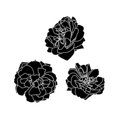 set three black silhouettes rose vector image