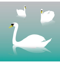 swan on the watter eps10 vector image vector image