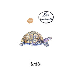 land turtle tortoise in watercolor vector image vector image