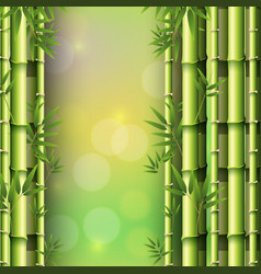 background design with bamboo forest vector image