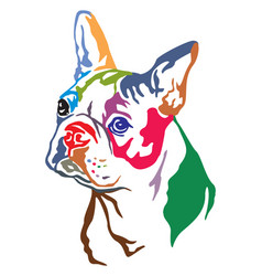 colorful decorative portrait of dog boston vector image