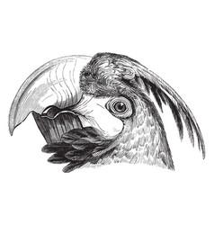 Head of a macaw vintage vector