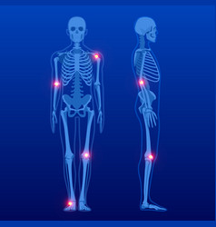 Human skeleton in front and profile human vector