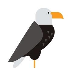 north american bald eagle raptor wildlife bird vector image