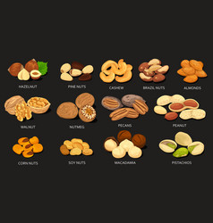 Set grains and beans food nuts vector