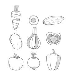 linear of vegetables carrots vector image