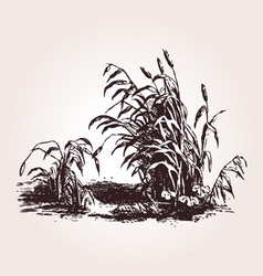 Vintage grass Design element vector image vector image