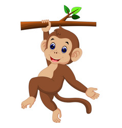 cute monkey vector image