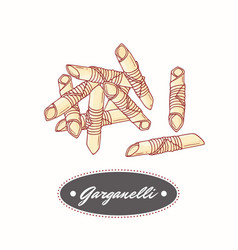 Hand drawn pasta garganelli isolated on white vector