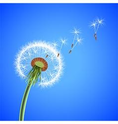 Dandelion seeds blowing away background vector