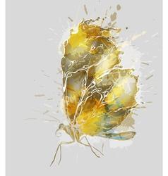 Gold splash butterfly vector image