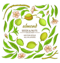 almond elements set vector image