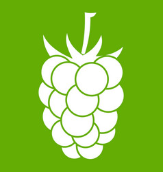 blackberry fruit icon green vector image