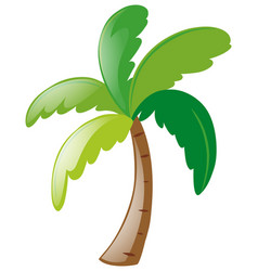 coconut tree on white background vector image