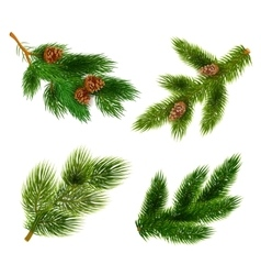 Fir and pine trees branches icons set vector image
