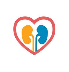 Human kidneys icon vector