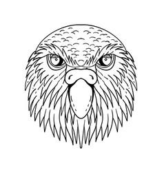 Kakapo owl parrot head drawing black and white vector
