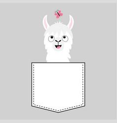llama alpaca face head in pocket butterfly vector image