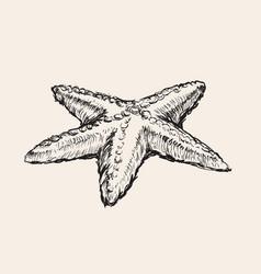 Starfish hand drawing sketch vector