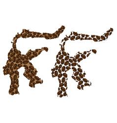 Sulawesi - map coffee bean vector