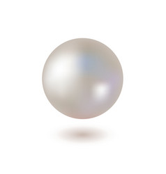 shiny pearl on white background vector image