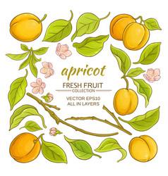 Apricot elements set vector